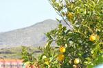 Stenies | Eiland Andros | De Griekse Gids foto 15