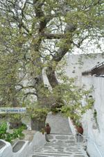 Panachrantou Klooster | Eiland Andros | De Griekse Gids | Foto 9 - Foto van De Griekse Gids