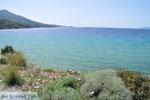 Strand Kypri (Golden Beach) bij Batsi | Eiland Andros | De Griekse Gids foto 007